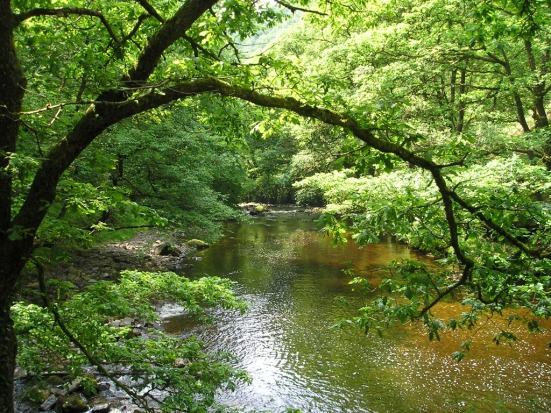 18 Tree and River Landscape